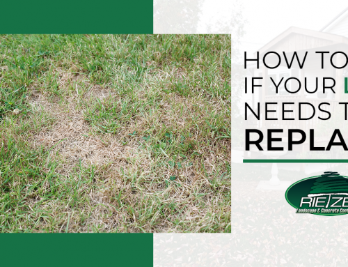 How To Tell If Your Lawn Needs To Be Replaced